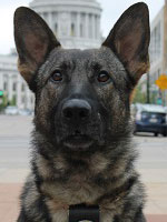 K9-officer-frees
