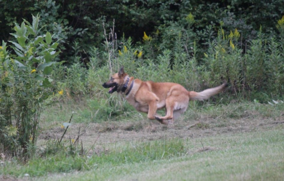 "Jagger running toward ""suspect"""